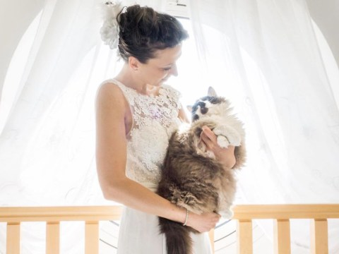 Photographer captures post-wedding photos with brides and their cats