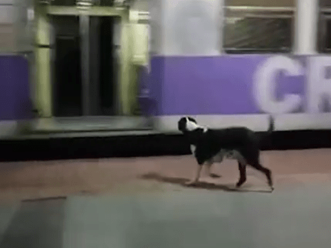This dog waits for the same train every day but no-one ever comes