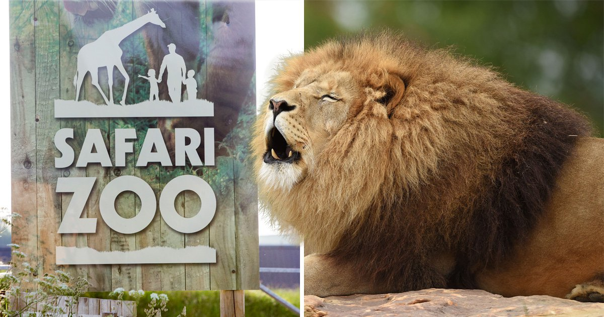Investigation launched after lion poisoned by contaminated meat 'at UK's worst zoo'