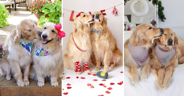 A blind Golden Retriever has never been happier thanks to his inseparable best friend who doesnt stop kissing him.