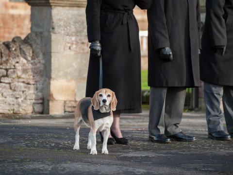 Basil the beagle works as a funeral therapy dog to help people through their toughest days