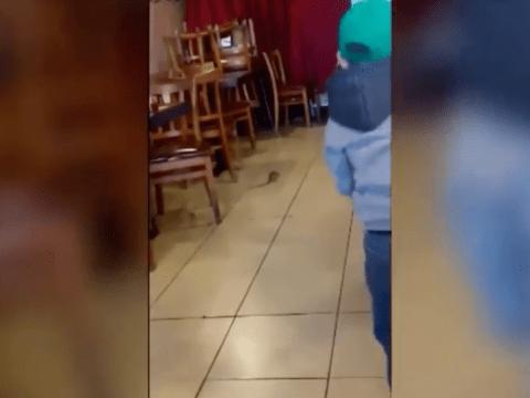 Customers horrified as rat scurries across restaurant floor