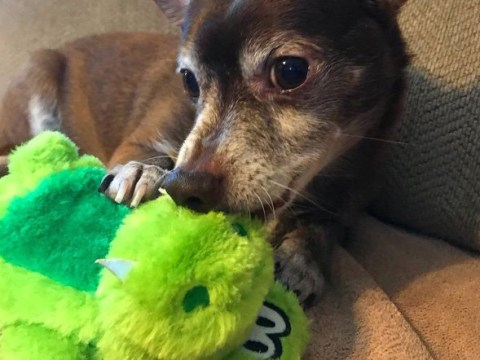 The internet did something nice for once and helped this old dog find his favourite toy