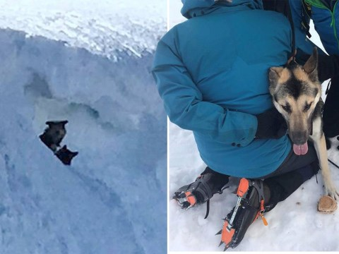 Mountaineer scales England's third highest peak to rescue stranger's dogs