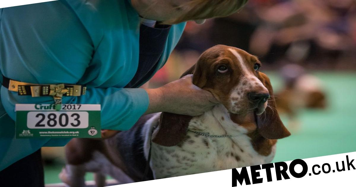 Crufts 2019 schedule and can you still buy tickets?