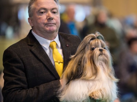 Crufts live stream: How to watch crufts online and on TV