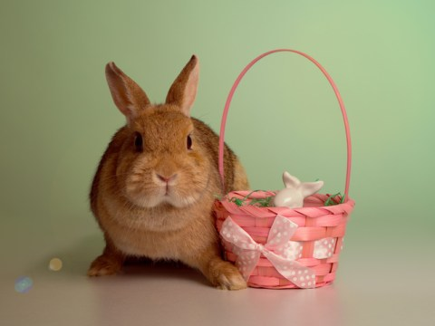 When does the Easter Bunny come? What day to expect the generous rabbit