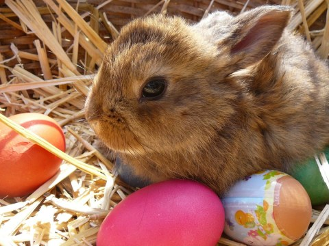 Pets at Home to stop selling rabbits over Easter