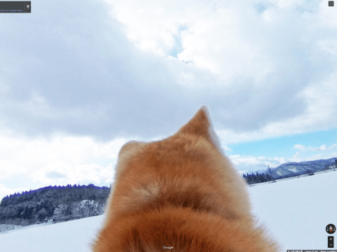 Google street view Japan launches 'dog view' for the birthplace of Akitas