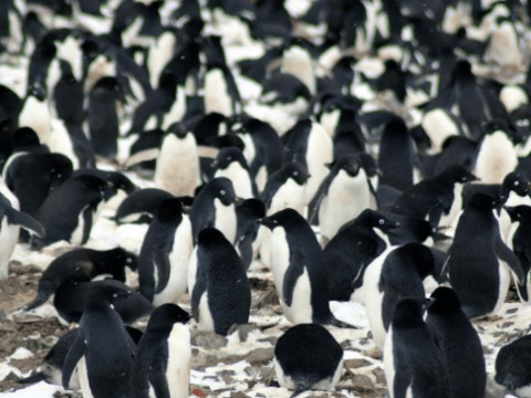 Secret 'city of penguins' hidden in the Danger Islands of Antarctica, scientists discover