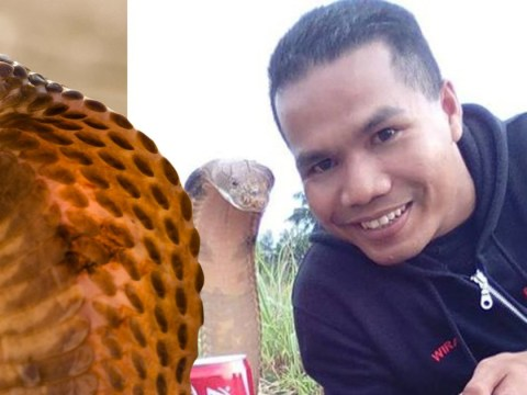 Man who didn't marry a snake dies by cobra bite