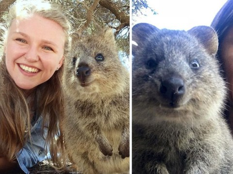 Instagram is cracking down on quokka selfies and people aren't happy