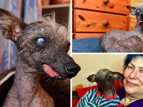 Hairless dog from Wales is crowned third ugliest in the world
