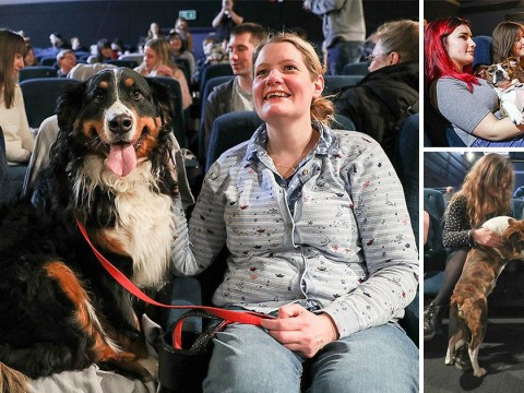 Loads of dogs went to the cinema to watch Wes Anderson's Isle of Dogs