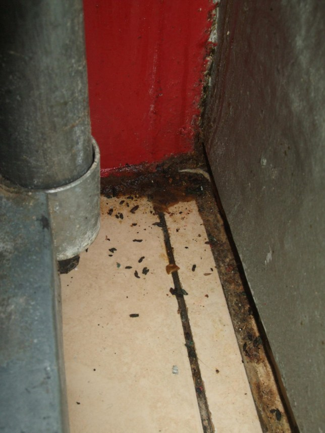 Swansea Curry House Owner Fined 26k After Rat Droppings