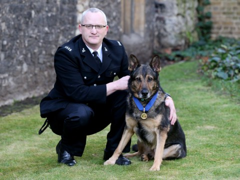 Who are the Britain's Got Talent act Dave Wardell and his hero dog Finn?