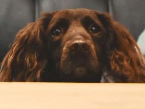 Dogs - Latest news on Metro UK