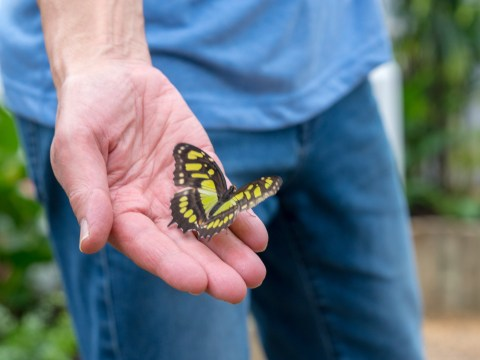 The Natural History Museum's Sensational Butterflies exhibition is now open