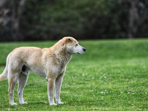 This dog has lived by himself in a park for 13 years
