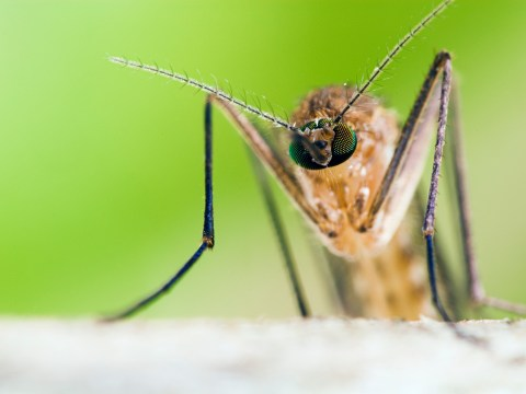 World Malaria Day 2018: What is it, when, and why do we need it?