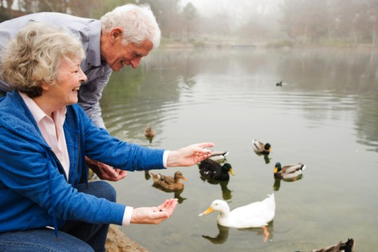 What To Feed Ducks On Your Next Park Visit Do They Eat Bread