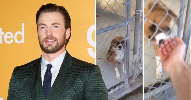 Chris Evans reveals how he met his rescue dog and it's