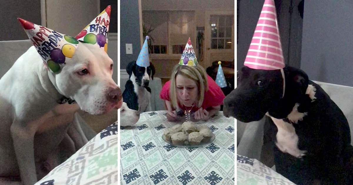 Watch dogs enjoying a birthday party, wearing party hats and eating cake