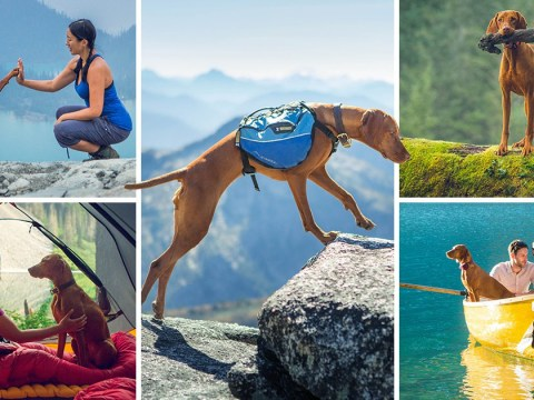 Hungarian pooch's travel adventures on Instagram will leave you with serious wanderlust