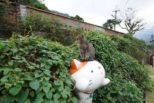 Pics by 23 Lab / Caters News - (Pictured: The Cat village in Taiwan.) - These photographs show life inside the notorious cat village in Taiwan. The small village of Taiwan is notorious with tourists for its cat village - where the cat population is DOUBLE that of humans. The island, which used to be a mining town, has millions of visitors per year thanks to its bustling kitty population of roughly 200 cats. The footage shows the true abundance of cats in the small village. - SEE CATERS COPY