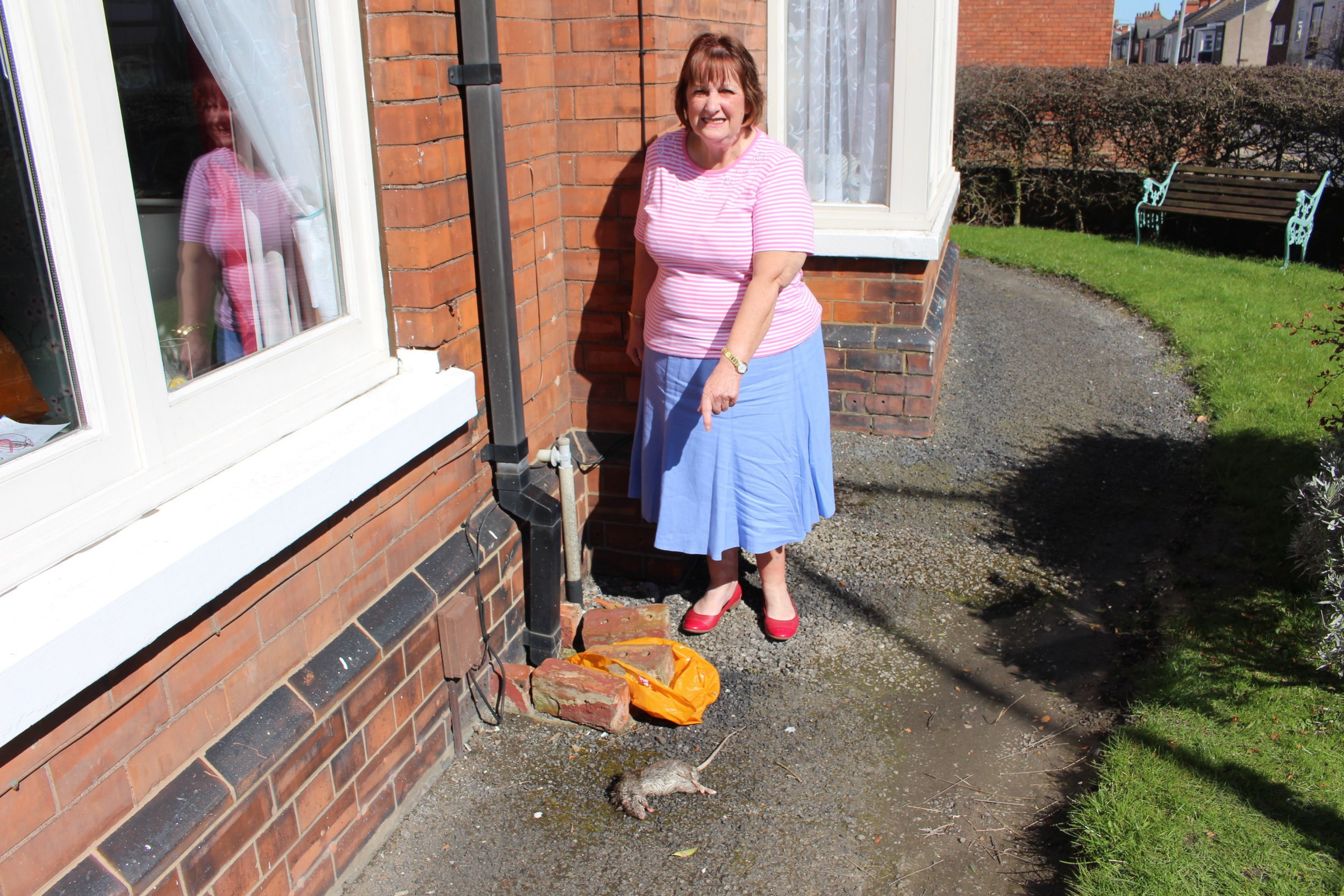 """An elderly cancer survivor has spoken of her disgust after her housing provider told her to """"clean up a dead rat herself"""" after she found one below her windowsill. Ms Madin, of Mill Road, in Cleethorpes, woke to find a huge dead rat located under the windowsill of her home. The 70 year old grandmother, who has just recently recovered from breast and lung cancer, says that she would in no way be able to do it herself, as she does not want to risk going near rat because her immune system is still very poor after her treatment. What outraged her though was whenever she rang her housing provider, Longhurst and Havelock, to ask if they would be able to get someone round to remove the dead animal, she was told over the phone that she would have to remove it herself and put it in the bin."""