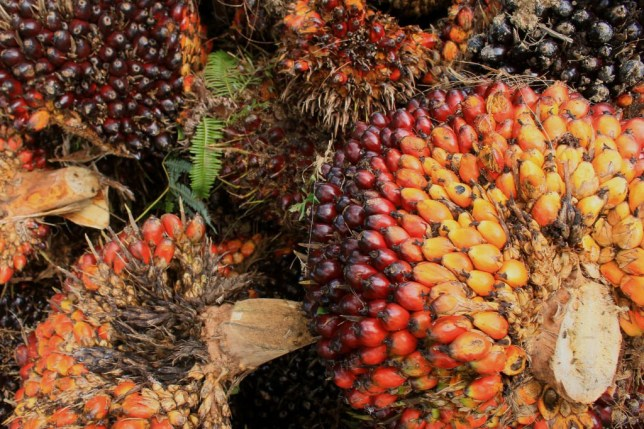 No more palm oil in Iceland own brand food Getty Images