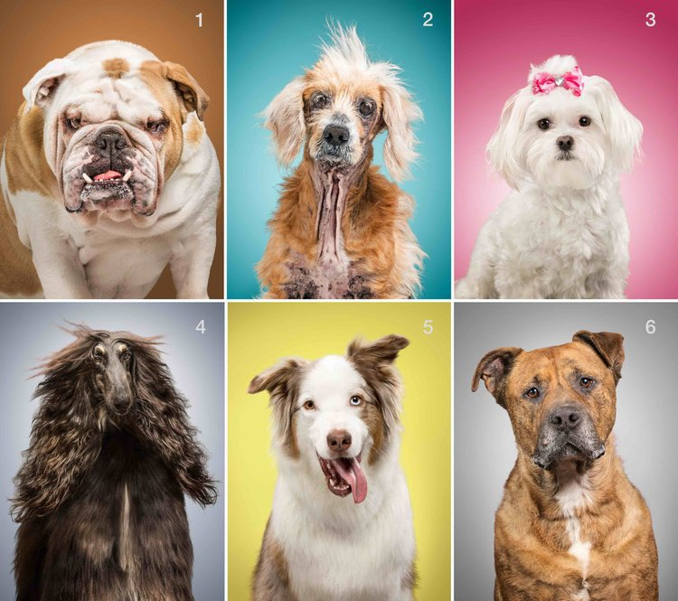 An artist took photos of dogs and all their possessions
