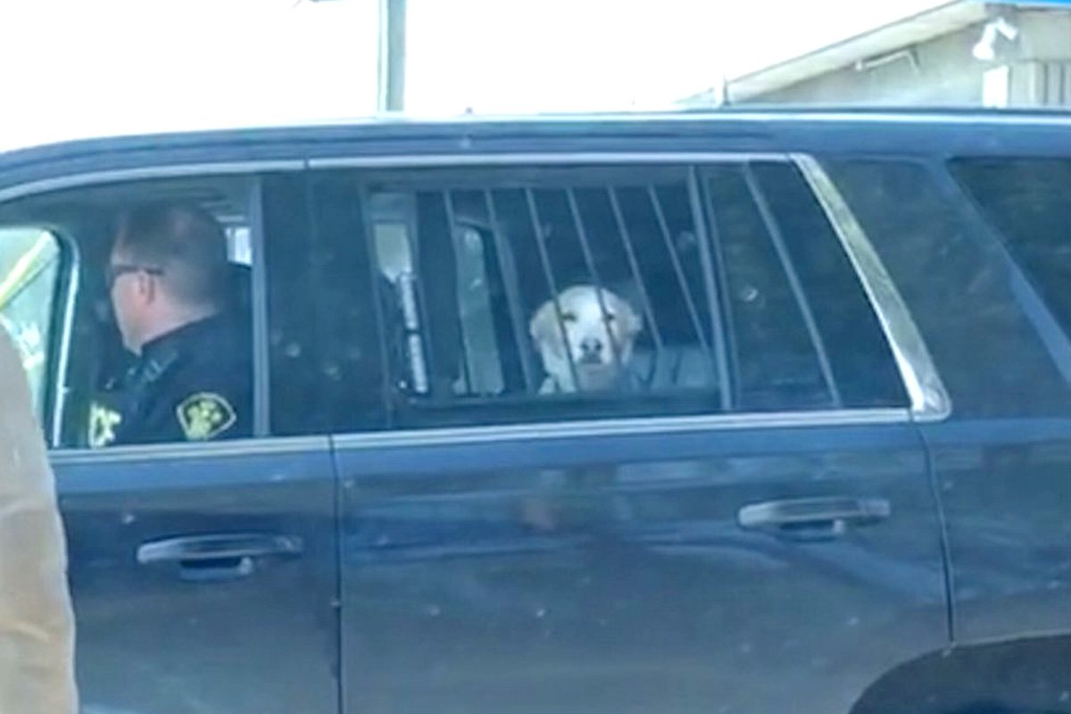Desperately sad dog behind bars is regretting his life choices