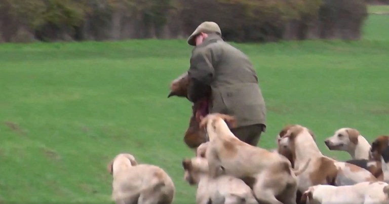 METRO GRAB - taken from East Kent Sabs Facebook video with permission Fox ripped apart Facebook/East Kent Sabs
