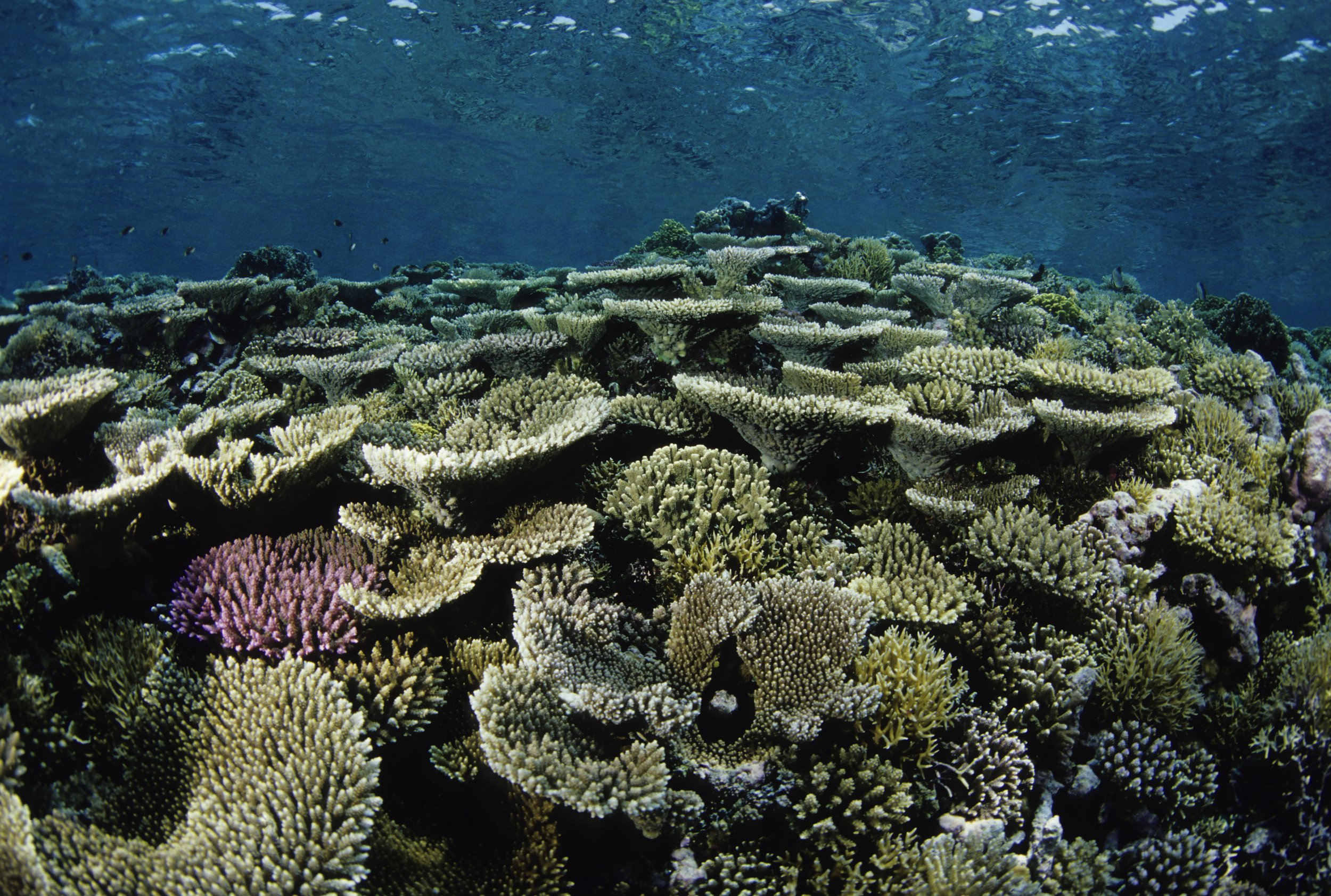 Magical hard coral reef showing signs of minor coral bleaching.