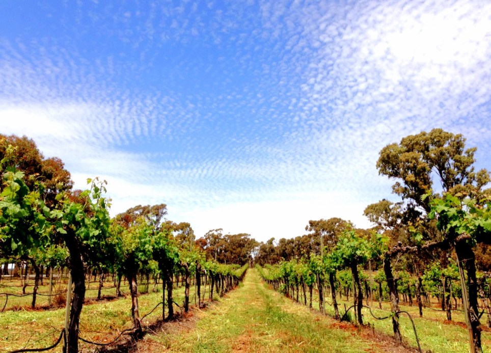 Clare-Valley-wineries-adelaide
