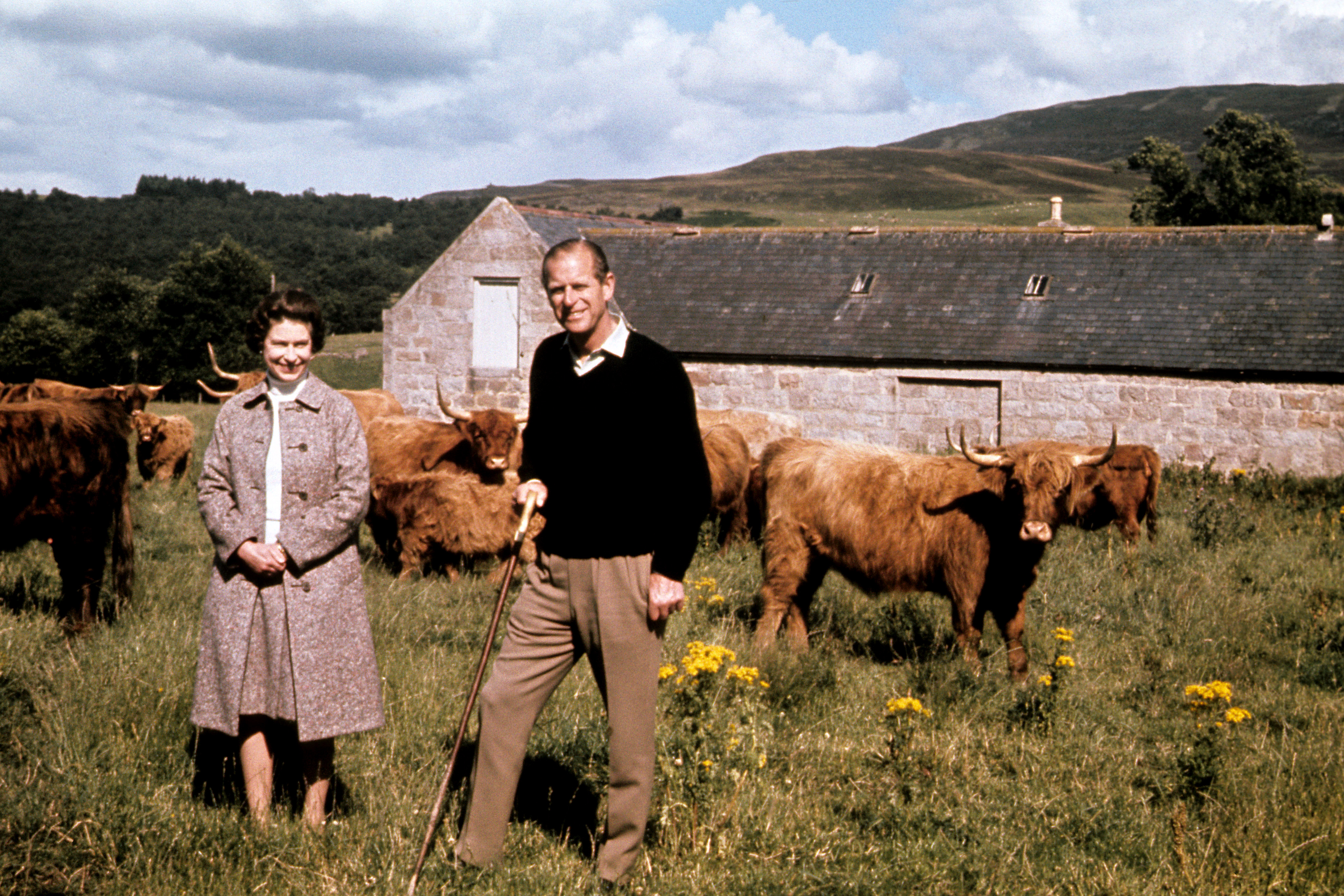 The Queen's cows are so pampered they sleep on waterbeds