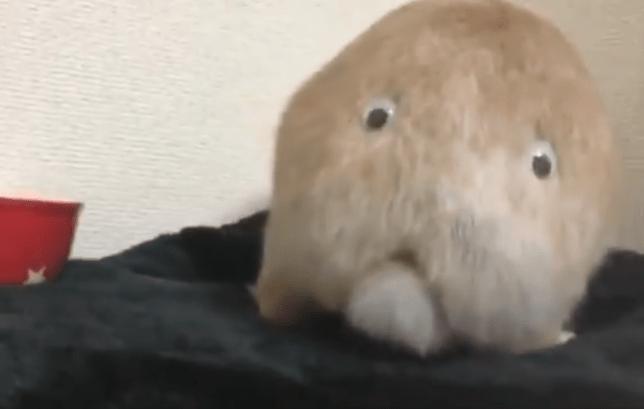 A rabbit butt with googly eyes