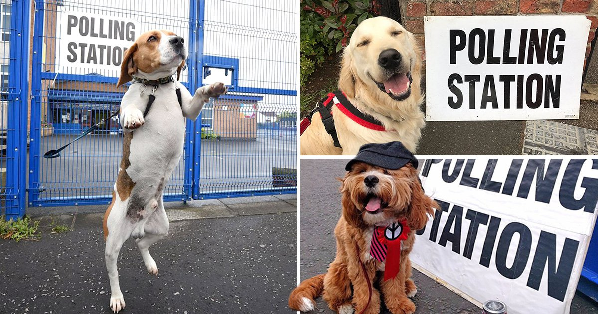 Very good dogs spotted casting their votes at polling stations