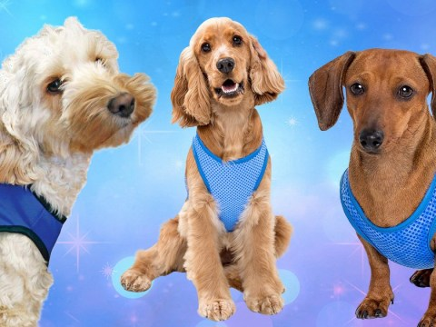 These jackets will cool your dog down in this hot weather