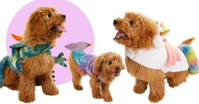 Grab your dog, B&M is selling a mermaid costume for your
