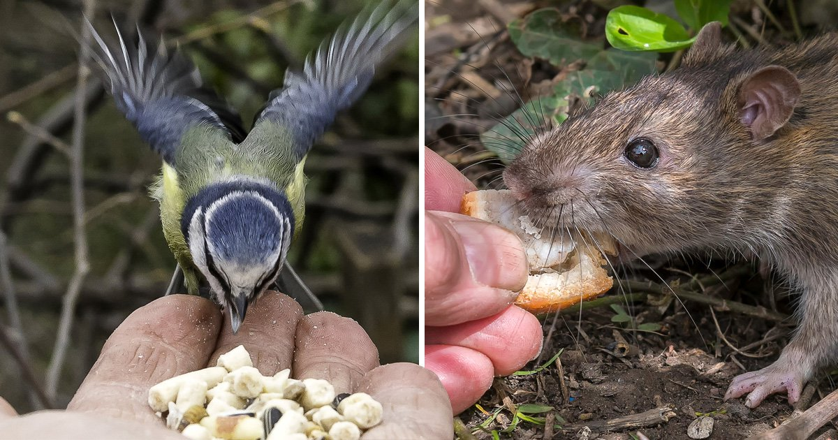 Meet the real-life Dr Dolittle who has wild animals eating from the palm of his hand