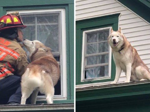 Watch the adorable moment a dog kisses a firefighter who rescued him from a roof