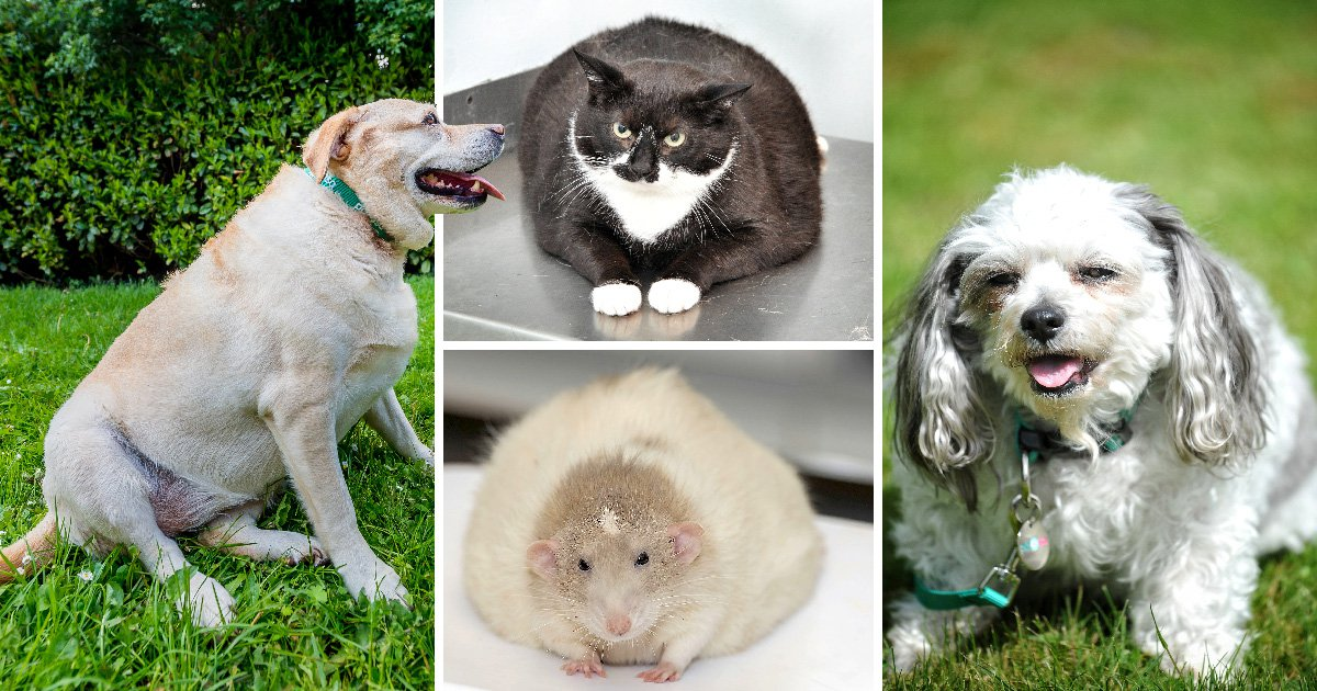 Meet the tubby animals in the running to win a pet-slimming competition