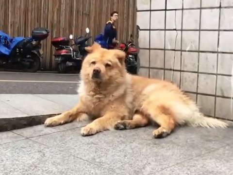 Very patient dog waits 12 hours at train station every day for his owner to come home