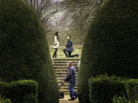 Oblivious gardener accidentally photobombs proposal in hilarious pictures