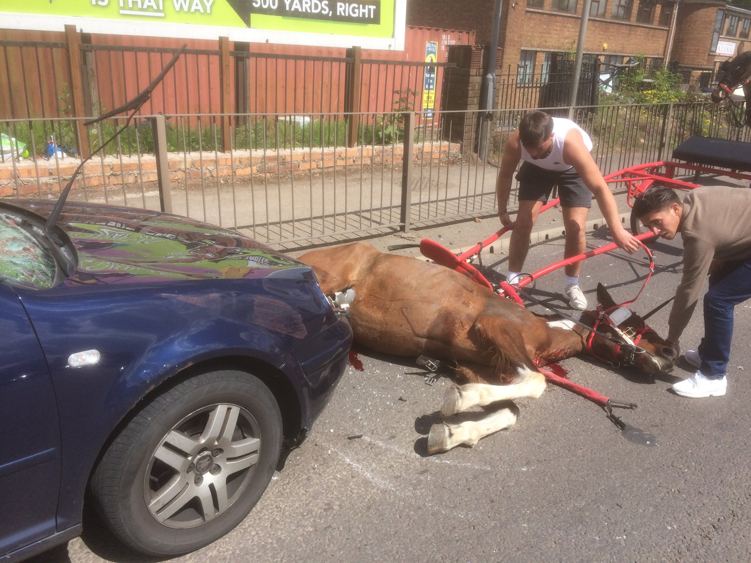 Bleeding horse dumped after crash RSPCA appeals for information as horse abandoned after being hit by car The RSPCA is appealing for information after a horse was abandoned by the men with her after she crashed into a car. Bleeding horse dumped after crash RSPCA appeals for information as horse abandoned after being hit by car The RSPCA is appealing for information after a horse was abandoned by the men with her after she crashed into a car. The horse was part of a procession in Great Bridge Road in Bilston on Sunday (May 13) with lots of traditional horse-drawn carriages. Unfortunately, one of the horses bolted and collided head-on with a car. The impact smashed the windscreen of an oncoming vehicle and left the mare lying in the road and bleeding profusely. RSPCA Inspector Vicki Taylor, who was on the scene alongside police, said: ???The horse was lying in the road and bleeding where the smashed windscreen had cut into her front and legs. This was a shocking sight and she was clearly suffering. ???Thankfully the family who were in the car were uninjured but their vehicle was badly damaged. ???When I arrived, the men with the horse had already left, dragging the trap away with them. Witnesses provided photos of the owners taking off the trap and leaving the horse in the road. It must have been a shock to be involved in an accident like this but these men essentially abandoned this horse to die. ???As they left, the two men were pictured trying to hide their faces. We are now appealing for anyone who may recognise the horse, or the men in these images, to contact us in strictest confidence on the inspectorate appeal line on 0300 123 8018.??? The mare, who is about seven years old, is also underweight but is now recovering at a private boarding establishment in RSPCA care. Insp Taylor added: ???Thankfully there are no obvious broken bones and the equine vet is positive she will recover despite the open wounds which may take a