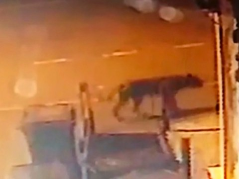 Woman says she filmed a lion on the roam in Birmingham