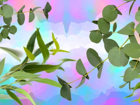 Upgrade your shower by hanging up some eucalyptus