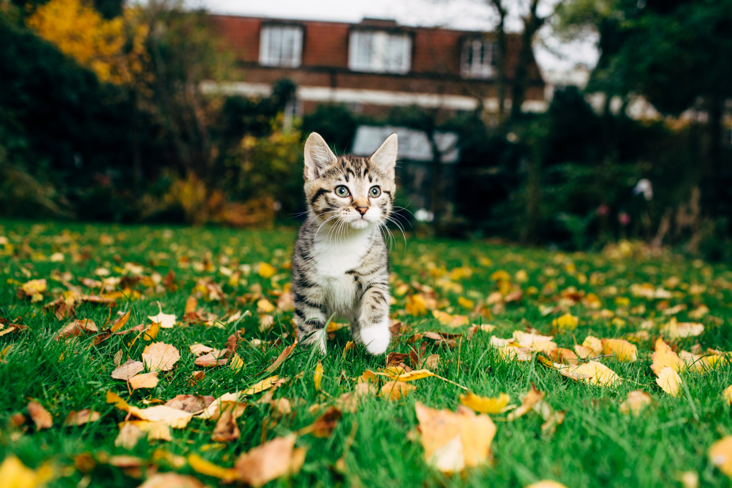 Is your garden safe for pets?